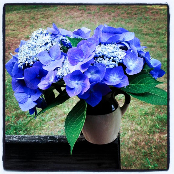 Deborah and Clyde's lace-cap hydrangeas, in a vase in Truro, MA, 7/19/13