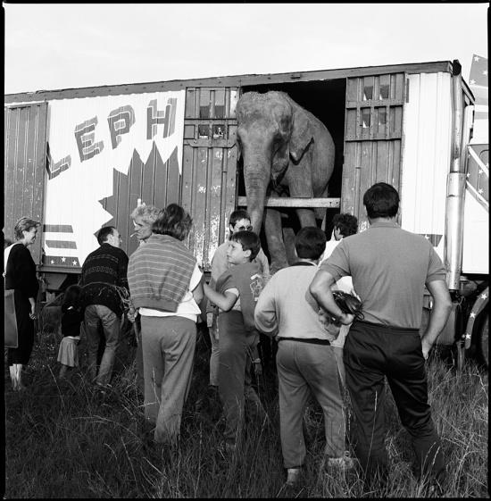 Elephant, Cirque Falcki, Île de Ré, France, summer 1988
