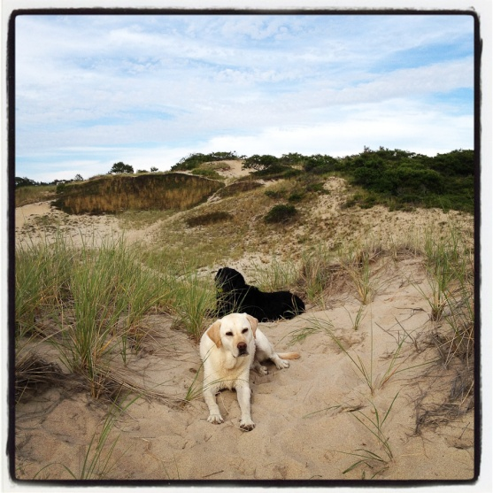 Ryder and Leo (dogs in the dunes), Fisher Beach, Truro, MA