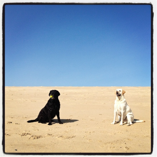 Leo and Ryder, Bolston Beach, Truro, MA