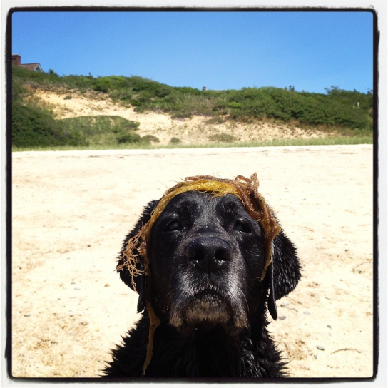 Leo, Fisher Beach, Truro, MA