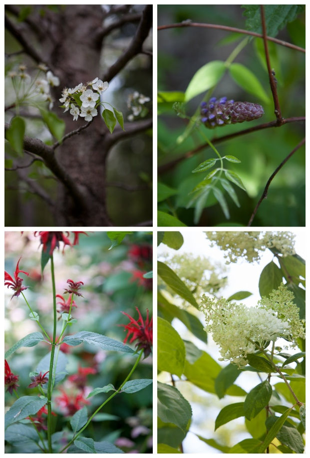 Clockwise from top left: pear tree, fountain wisteria, hydrangea and bee balm
