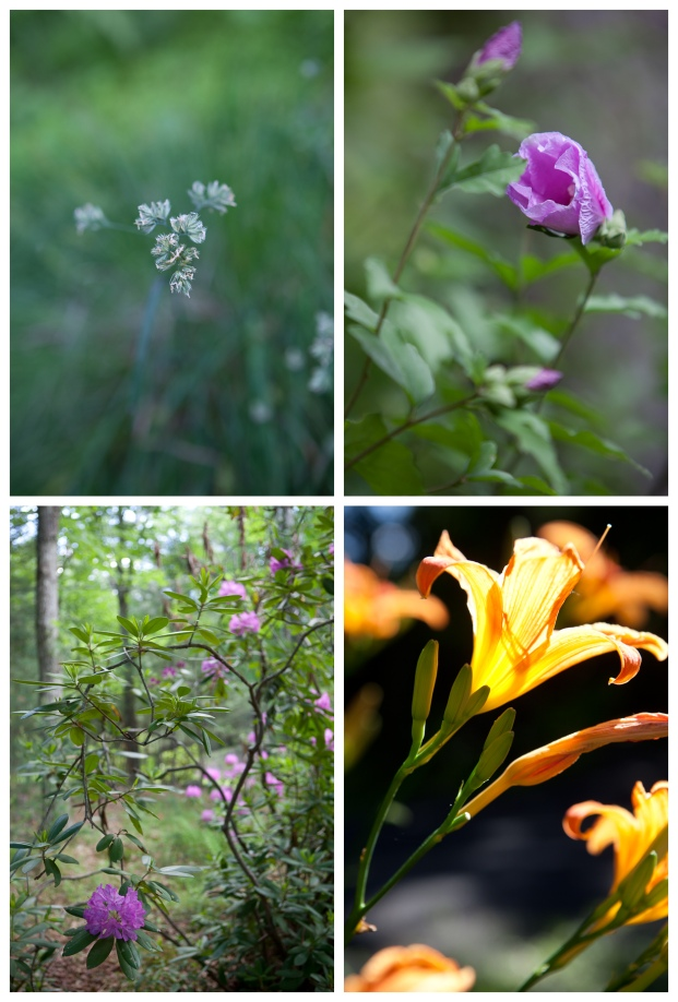 Clockwise from top left: wild flower, rose of sharon, day lily, rhododendron