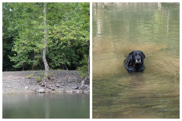 Swimming Hole, Stone Ridge, 8/17/15, left to right: Sycamore; and Leo, 13 1/2 Today