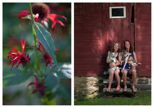 Left to right: Bee balm, Stone Ridge, NY; clockwise from top left: Daisy, Lillian, Finn and Bran, Stone Ridge, NY