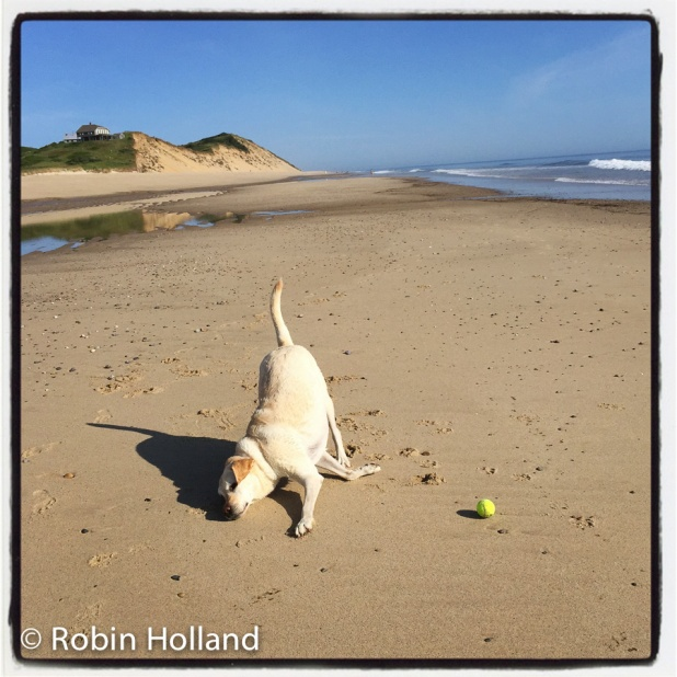 Ryder, Ballston Beach, Truro, MA, 7/17/15