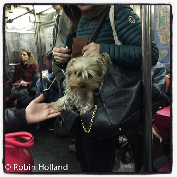 1 train, between 50th and 59th Streets, NYC, 10/25/16