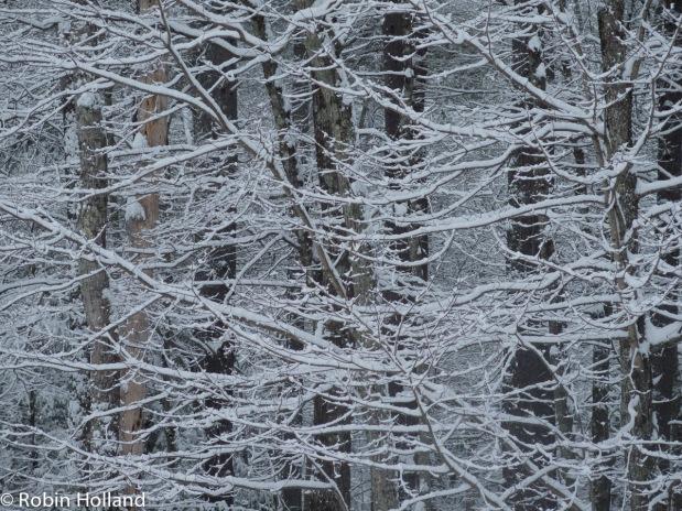 Stone Ridge, NY, 12/29/16 3:17 pm
