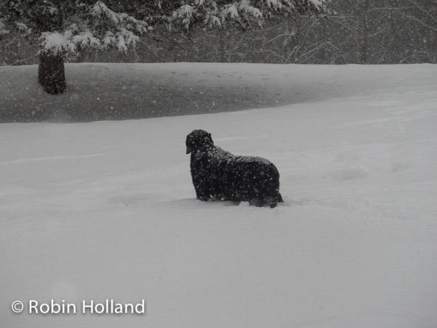 Leo, Stone Ridge, NY, 2/12/17